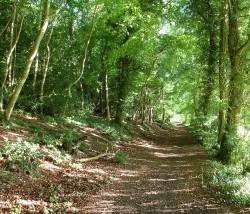 Beech Woods, Chiltern Hills
